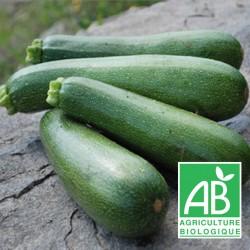 Courgette Verte 500g