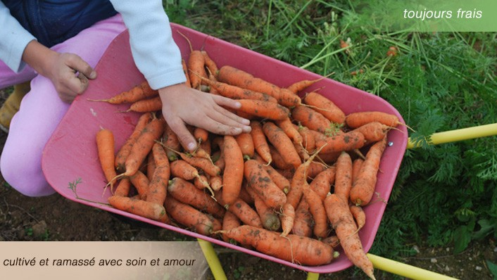 Légumes bio frais cultivés avec l'amour